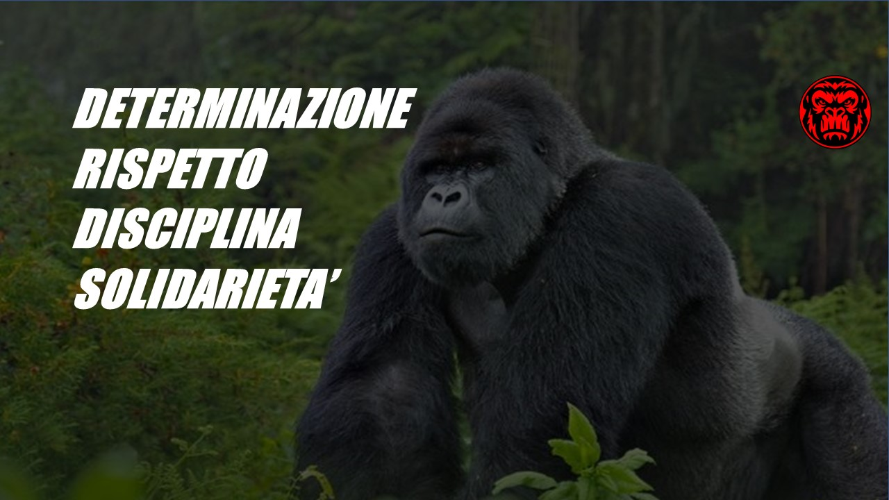 Gorillaz Ironteam Valori